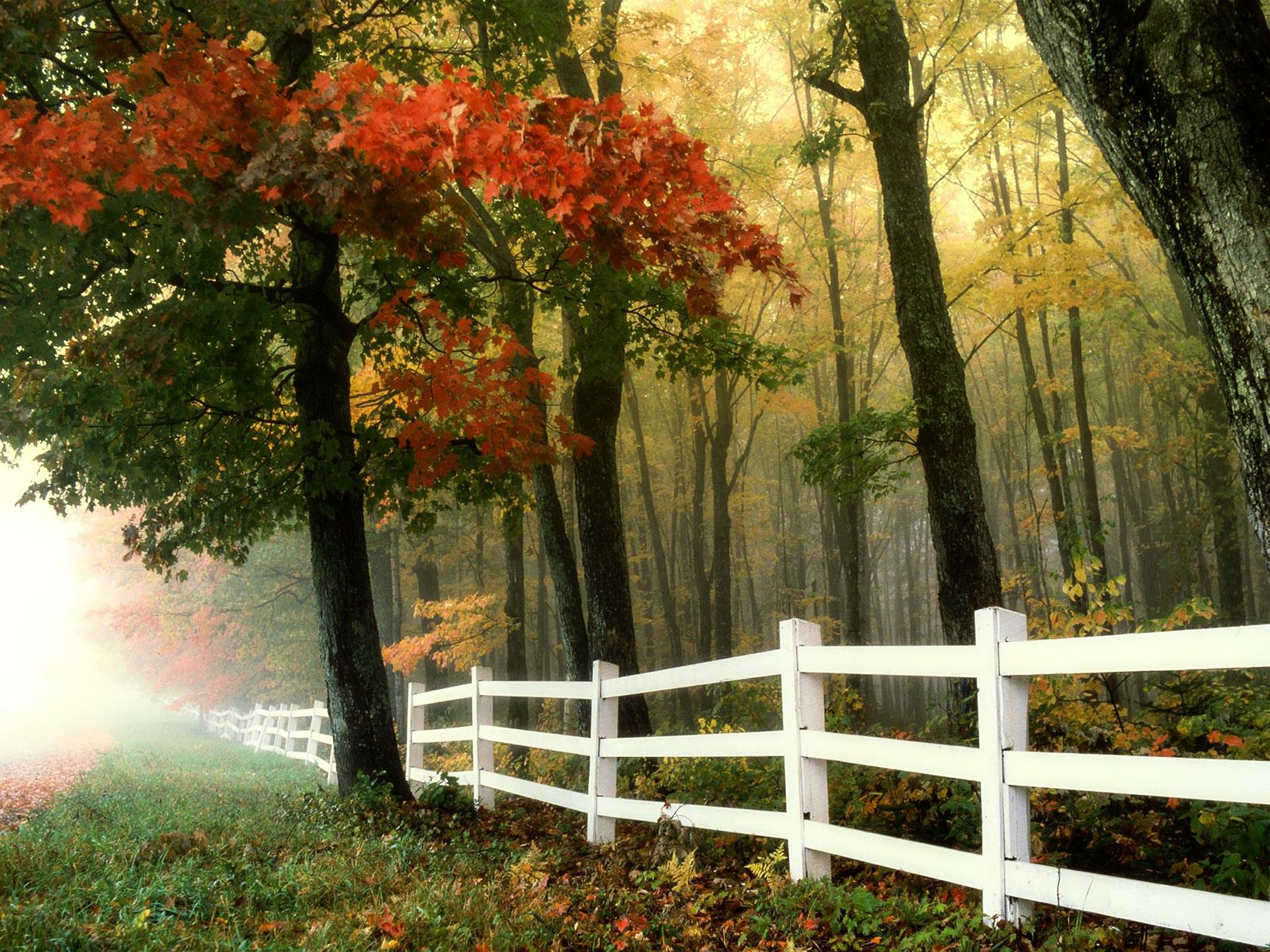 panele drewniane ogrodzeniowe