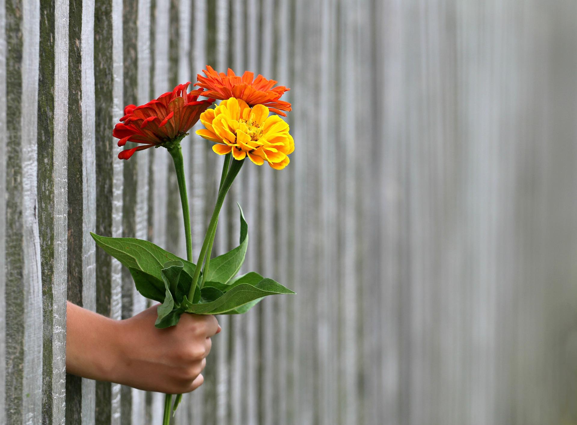 Wzory ogrodzeń