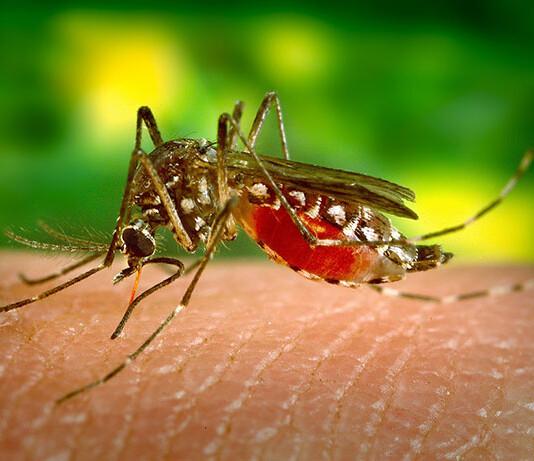 Środki biobójcze na owady i insekty